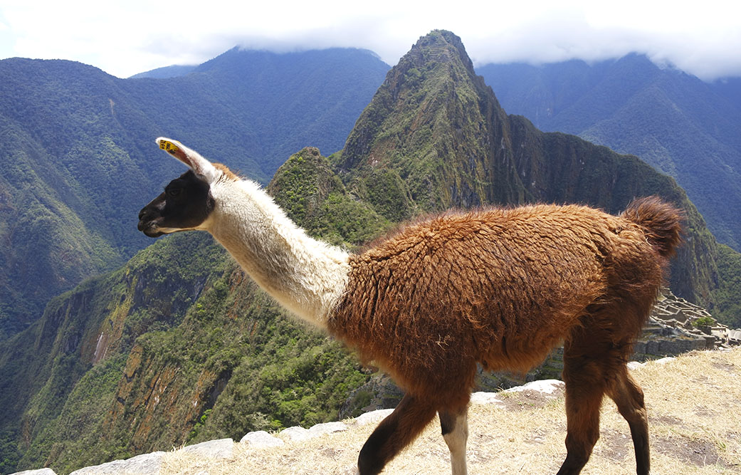 Dicas para planejar uma viagem ao Peru - Machu Picchu